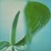 anthurium-winter1-2annah