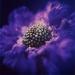 flower-summer2-3annahal