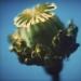 poppy-spring11-2annahalm