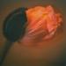 poppy-winter9-7annahalms