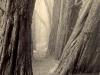 cypress-path