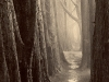 cypress-trail