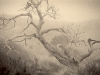 cypress_in_fog